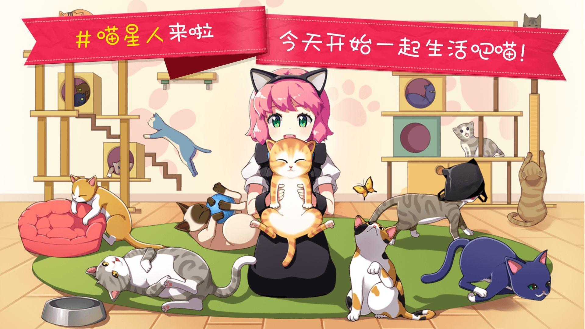 猫猫咖啡屋投喂猫粮方法