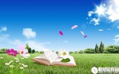 壁纸精选:阳光灿烂的夏天V1.0.0.0官方版